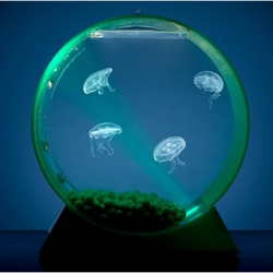 Jelly Fish Tank on Led Desktop Jellyfish Tank   Dwellinggawker